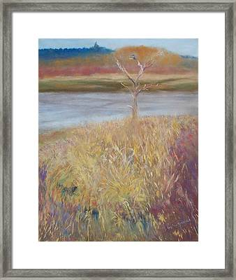 Kingfisher Framed Print by Jackie Bush-Turner