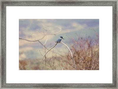 Kingfisher On A Branch Framed Print by Jeff Swan