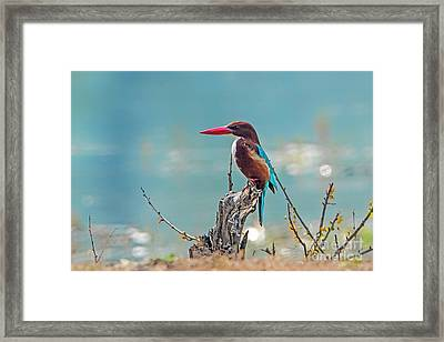Kingfisher On A Stump Framed Print