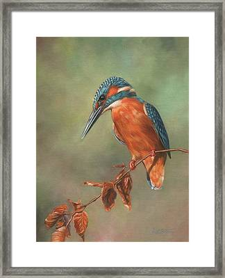 Kingfisher Perched Framed Print