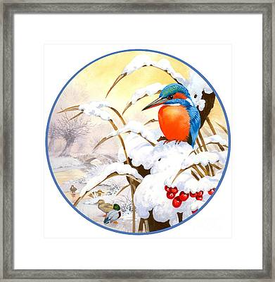 Kingfisher Plate Framed Print by John Francis