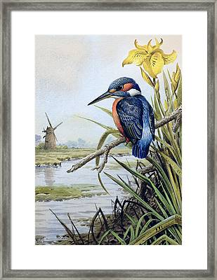 Kingfisher With Flag Iris And Windmill Framed Print by Carl Donner