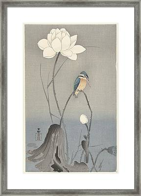 Kingfisher With Lotus Flower, Ohara Koson, 1900 - 1945 Framed Print