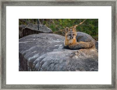 Framed Print featuring the photograph Kingpin by Norman Peay