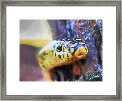 Kingsnake Peekaboo Framed Print by JC Findley