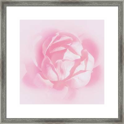 Kiss By A Rose Framed Print