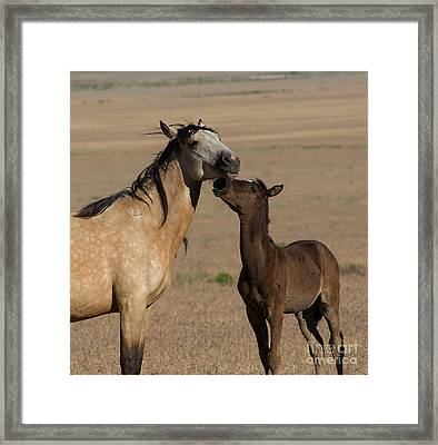 Kiss For Mom  Framed Print by Nicole Markmann Nelson