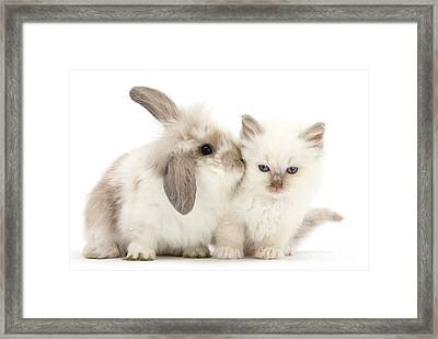 Kiss Her Fluffy Cheek Framed Print