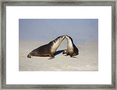 Kiss Framed Print by Mike  Dawson