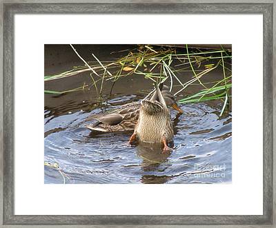 Kiss My Duck Framed Print