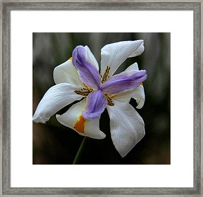 Framed Print featuring the photograph Kiss Of Wind by Tammy Espino