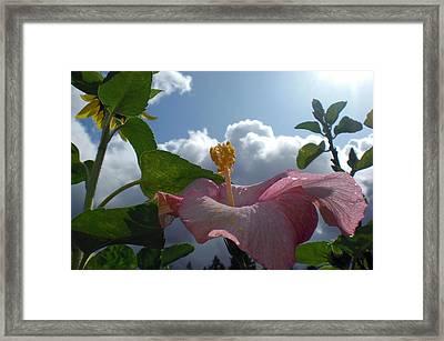 Kiss The Sky Framed Print by Holly Ethan