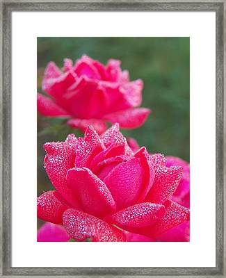 Kissed By Dew Framed Print