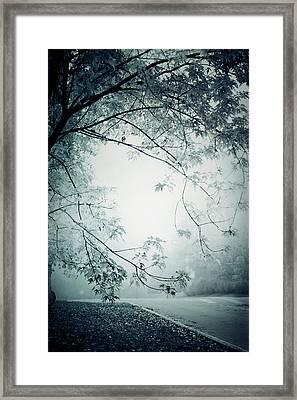 Kissed By Mist Framed Print
