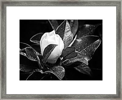 Kissed By Rain Framed Print by Carolyn Marshall