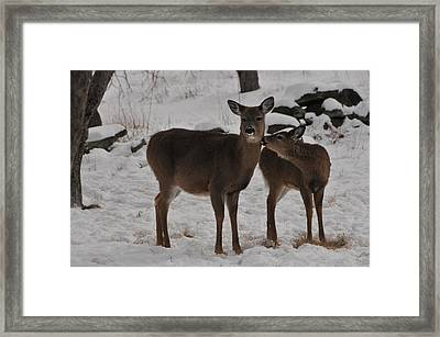 Kissing One Dear Framed Print by Mike Martin