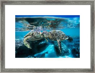 Kissing Turtle 2 Framed Print