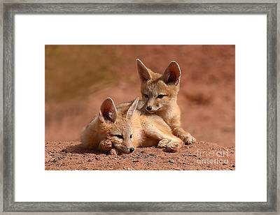 Kit Fox Pups On A Lazy Day Framed Print by Max Allen