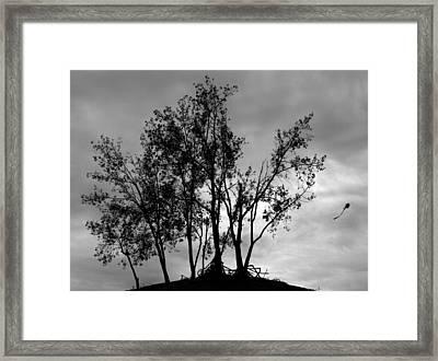 Kite Framed Print by Todd Fox