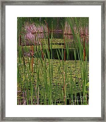 Kittatiny Spring Framed Print