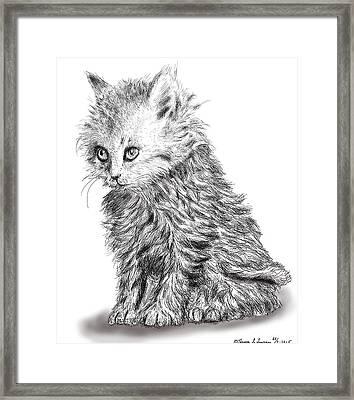 Kitten #1 Framed Print