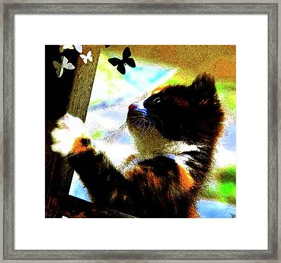 Kitten And Butterfly's Framed Print by David Lee Thompson