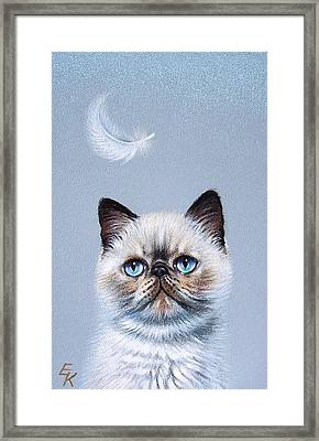 Kitten And Feather  Framed Print by Elena Kolotusha