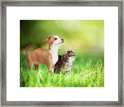 Kitten And Puppy In Long Green Grass Framed Print