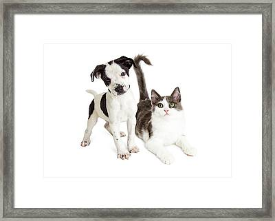 Kitten And Puppy Together Framed Print by Susan Schmitz
