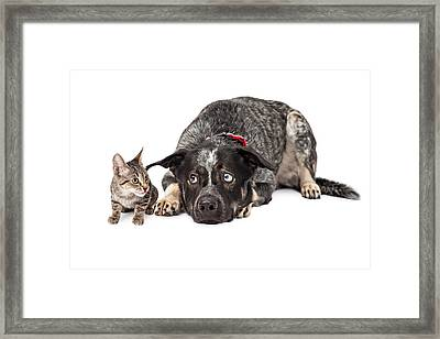 Kitten Annoying Patient Dog Framed Print by Susan Schmitz