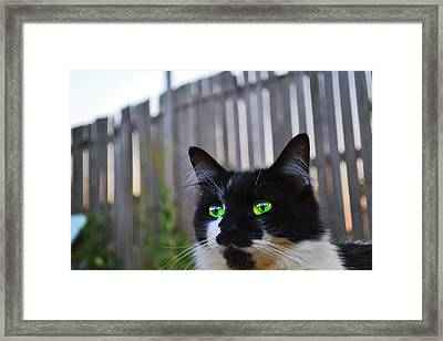 Framed Print featuring the photograph Kitten At Twilight  by Naomi Burgess