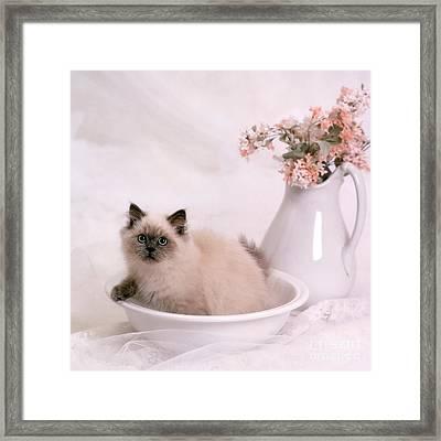 Kitten Bath Framed Print by Crystal Garner