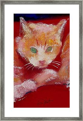 Kitten Framed Print by Charles Stuart