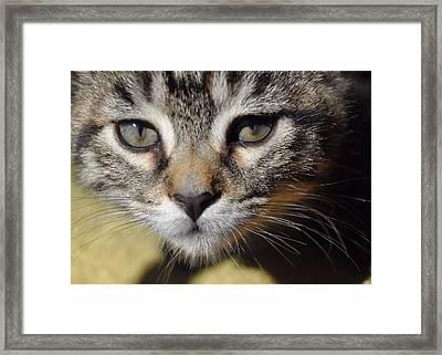 Kitten Curiosity Framed Print by JAMART Photography