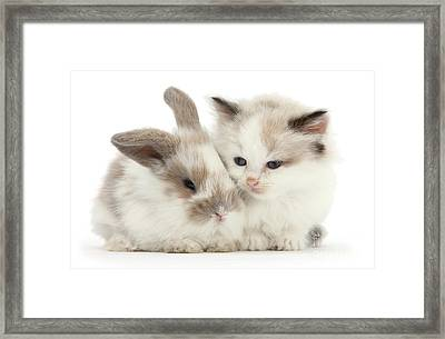 Kitten Cute Framed Print