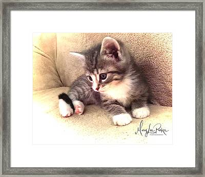 Kitten Deep In Thought Framed Print