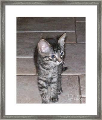 Martius Kitten Framed Print