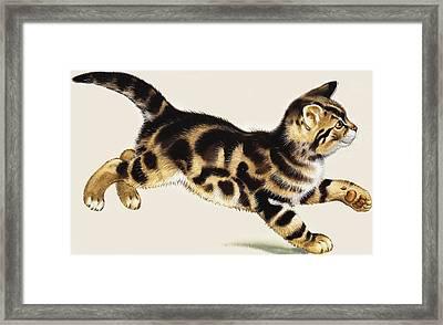 Kitten Framed Print by English School