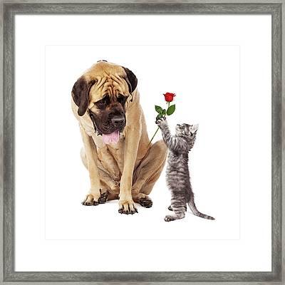 Kitten Handing Big Dog A Rose Flower Framed Print