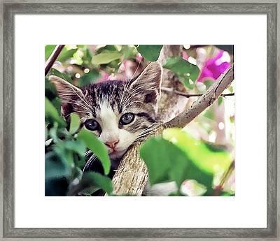 Kitten Hiding Out Framed Print by Francesco Roncone
