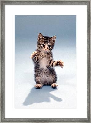 Kitten Hug Framed Print