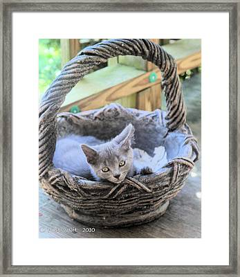 Kitten In A Basket Framed Print