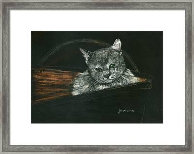 Kitten In A Basket Framed Print by Jessica Kale