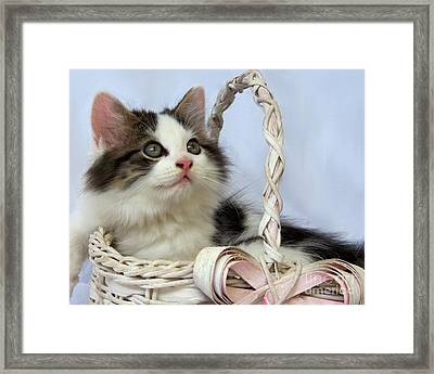 Kitten In Basket Framed Print by Jai Johnson