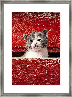Kitten In Red Drawer Framed Print