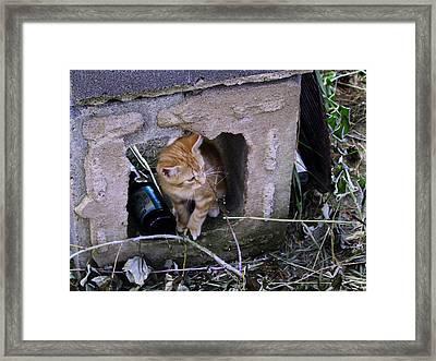 Kitten In The Junk Yard Framed Print by Larry Capra