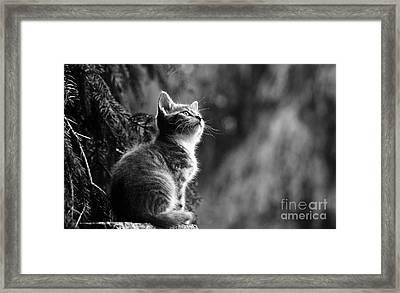 Kitten In The Tree Framed Print