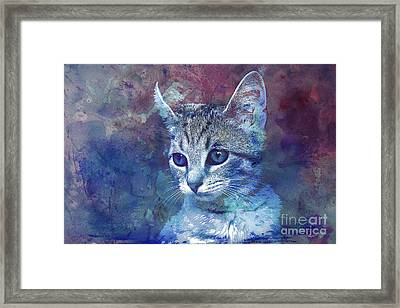 Kitten Framed Print by Jutta Maria Pusl