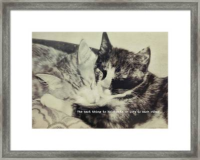 Kitten Nap Quote Framed Print by JAMART Photography