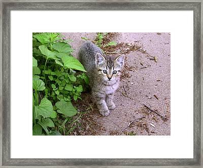 Kitten On The Patio Framed Print by Larry Capra